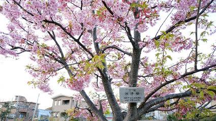 横須賀駅ヴェルニー公園